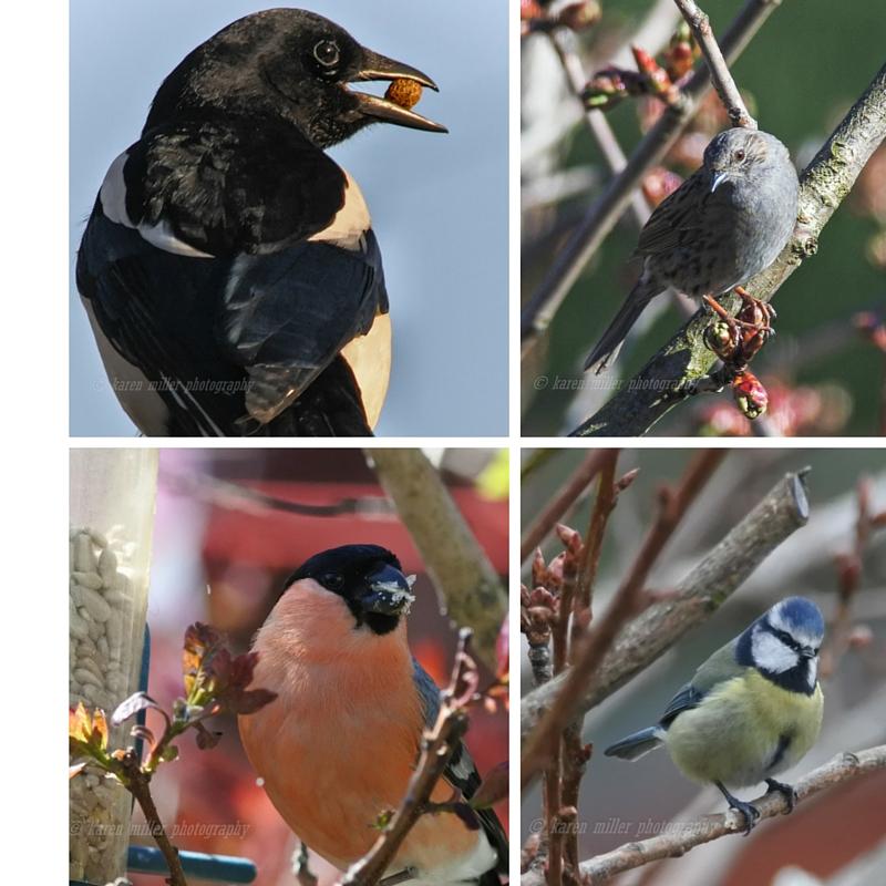 birds j5