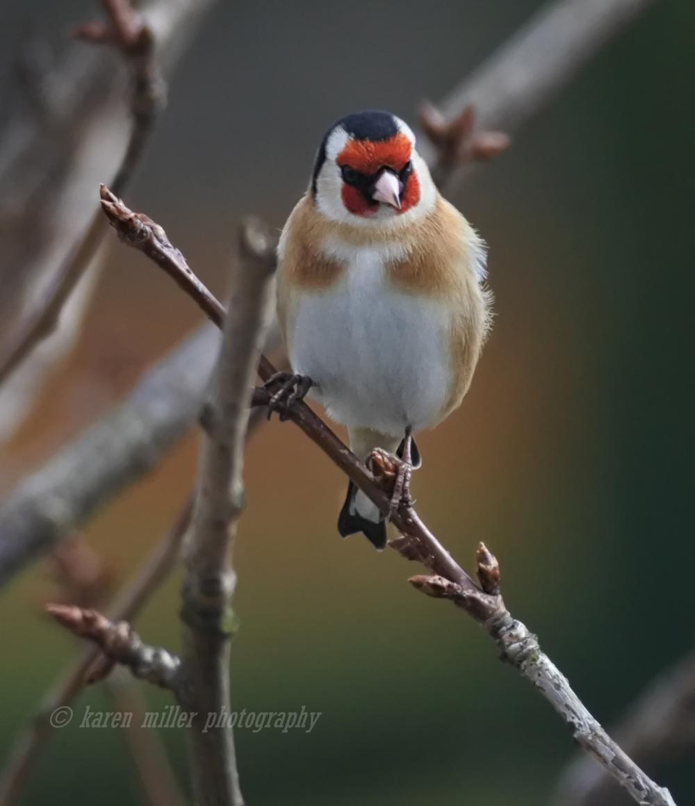 birdswithj1-3