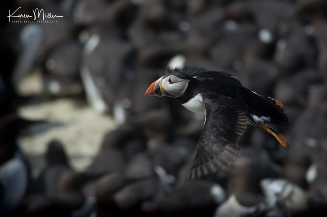 Farne2017_png_c-3225