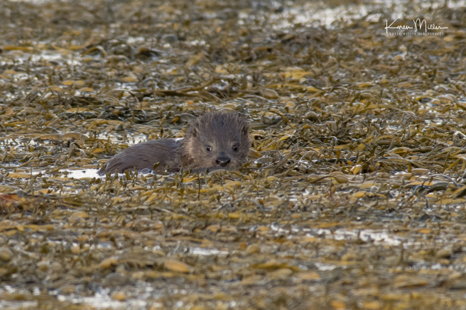 otters_friday_png_c-3378