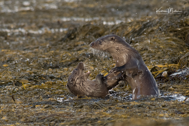 otters_friday_png_c-3458