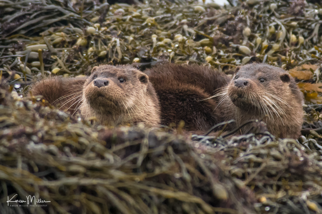 otters_monday_png_c-0240
