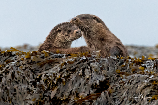 otters_monday_png_c-0398