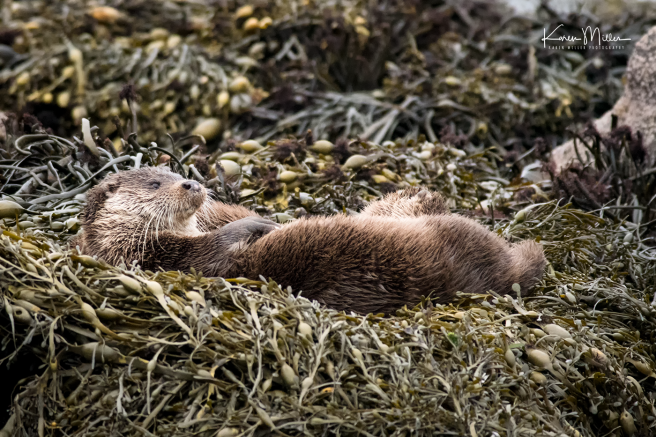 otters_sunday_png_c-0077