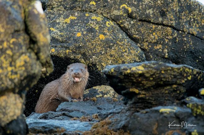 otters_thursday_png_c-2396