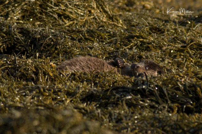 otters_thursday_png_c-2455