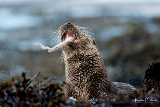 otters_thursday_png_c-2602