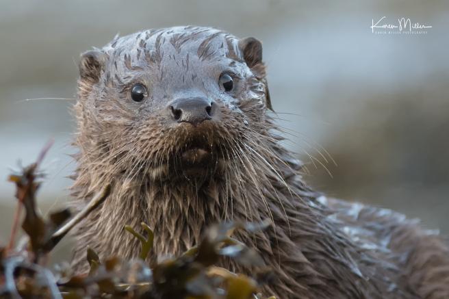 otters_thursday_png_c-2707