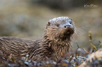 otters_thursday_png_c-2719