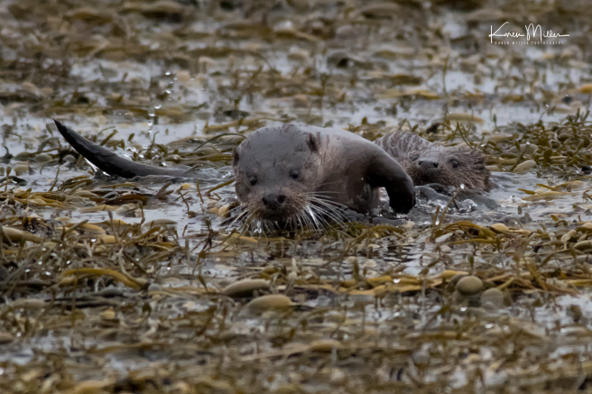 otters_tuesday_png_c-0952