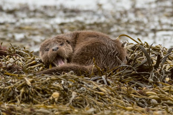 otters_wednesday_png_c-1452