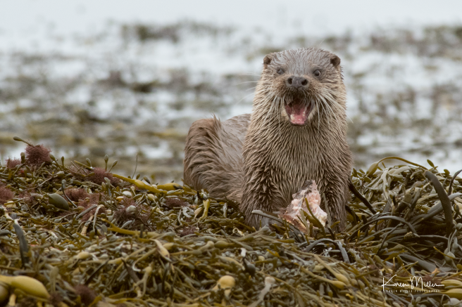 otters_wednesday_png_c-1532