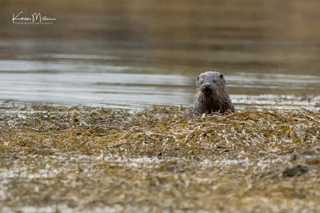 otters_wednesday_png_c-2266