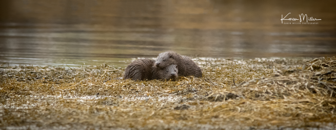 otters_wednesday_png_c-2347