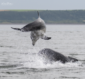 Highlands_dolphins_Aug2017_png_c-2365