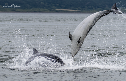 Highlands_dolphins_Aug2017_png_c-2627