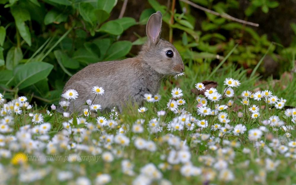 rabbit04
