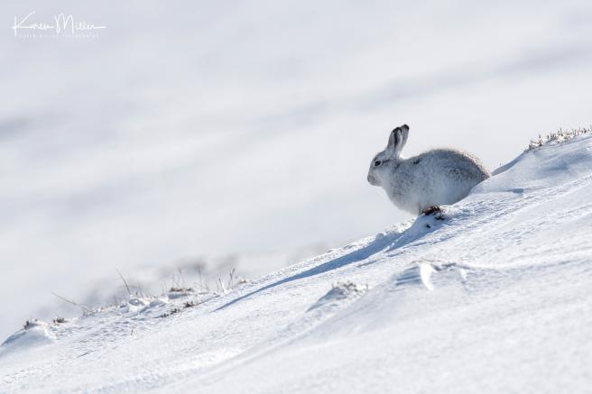 65-wide-angle-hare