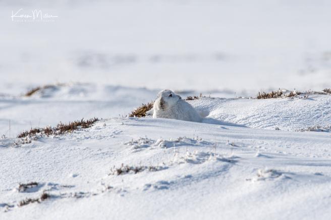 67-wide-angle-hare