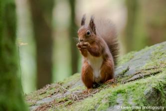AberfoyleSquirrel-17