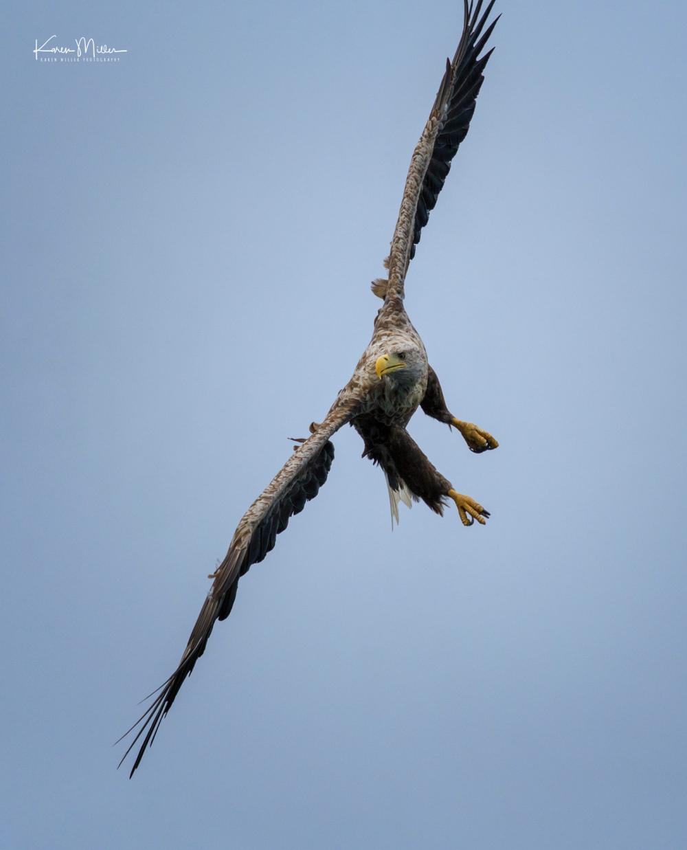 Seabirds on Lunga