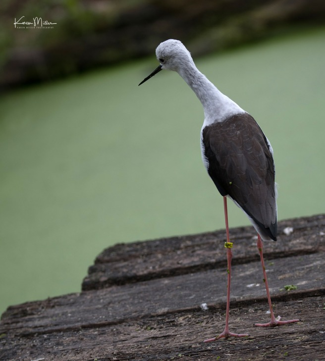 Slimbridge-jpg_c_7075