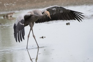 Slimbridge-jpg_c_8026