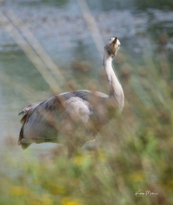Slimbridge-jpg_c_8276