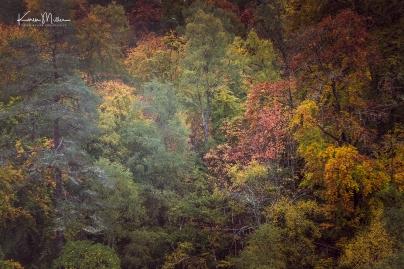 RogieFalls_Oct18-jpg_c_6826
